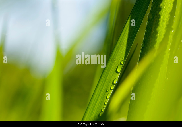 Close-Up Of Grass - Stock Image