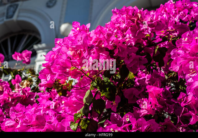 Balcony flowers in old house in Ponce, Puerto Rico. - Stock Image