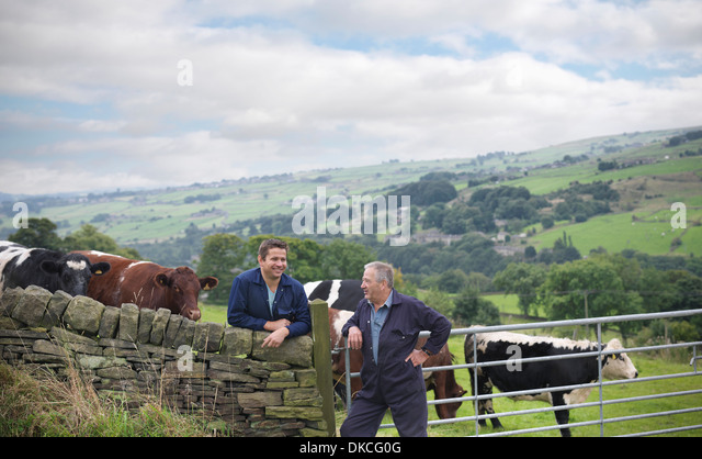 Farmer and son leaning on stone wall and discussing cattle in field - Stock Image