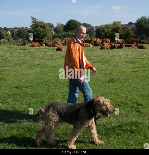 Dog Walking Bishops Tawton