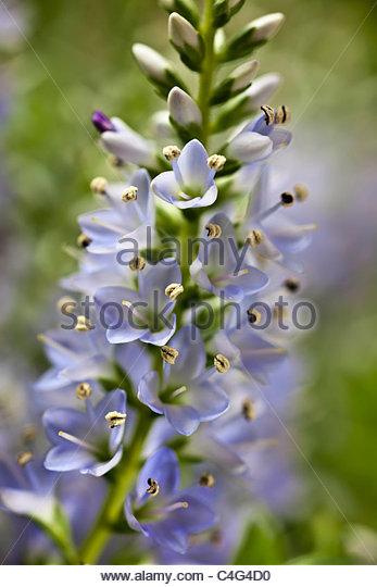 margret stock photos amp margret stock images alamy