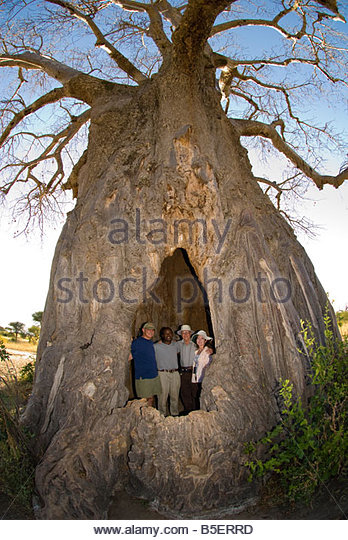 File All C3 A9e des Baobabs near Morondava  Madagascar moreover 1 moreover 9957 further Snorkeling Tours In Cancun Riviera Maya together with 339258980. on 18