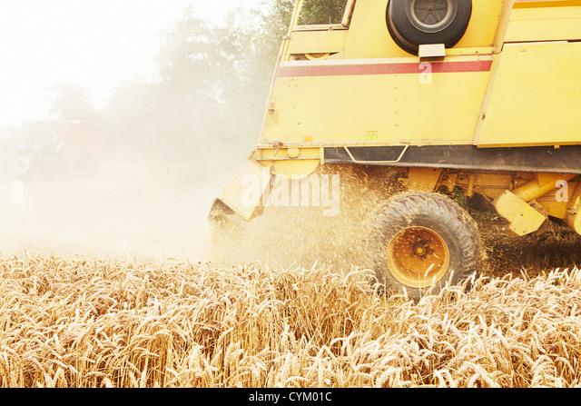 Tractor harvesting grains in crop field - Stock Image