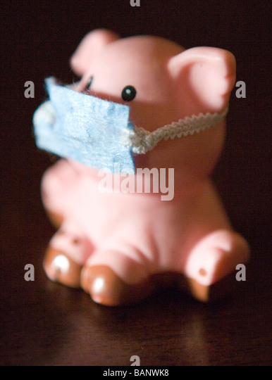 concept shot, swine flu, pig wearing mask to protect self from humans - Stock Image