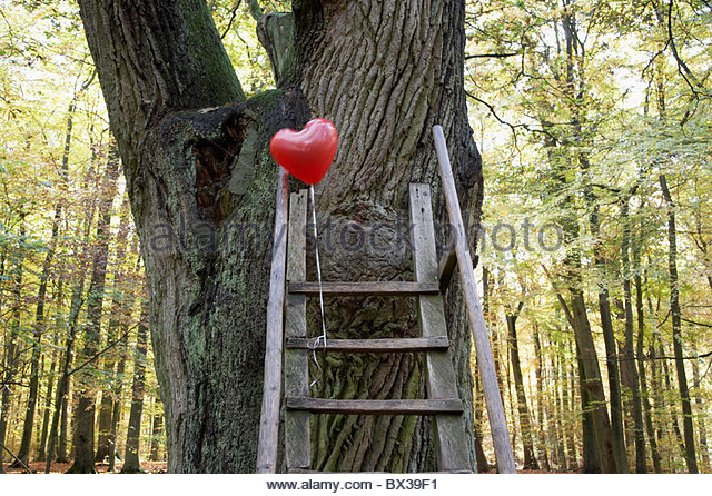 red balloon in shape of heart in autumn forest - Stock Image