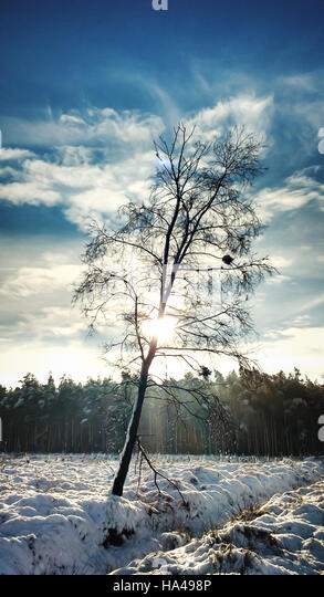a beautiful winter forest landscape with a single tree - Stock Image