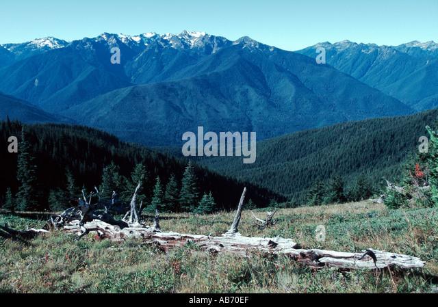 A view of Olympic National ParK near Hurricane Ridge in Sept Washington COPYRIGHT DUANE BURLESON - Stock Image