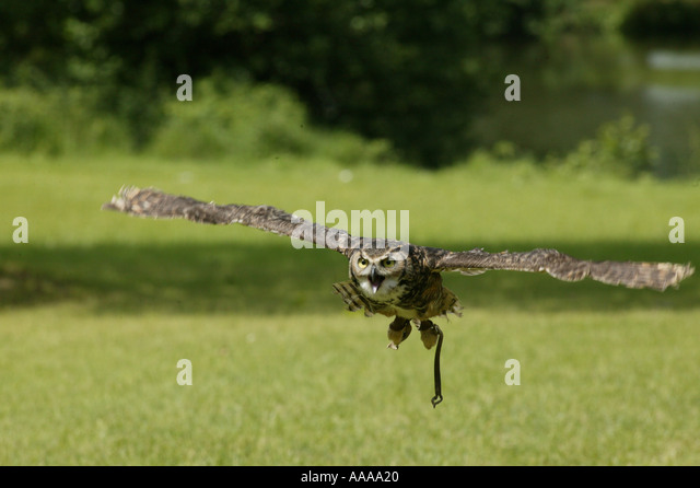 Falconry, the