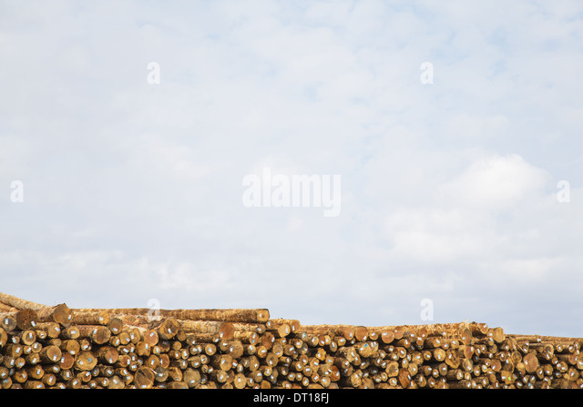 Port Angeles Calallum County Washington USA Stacks of freshly cut logs - Stock Image
