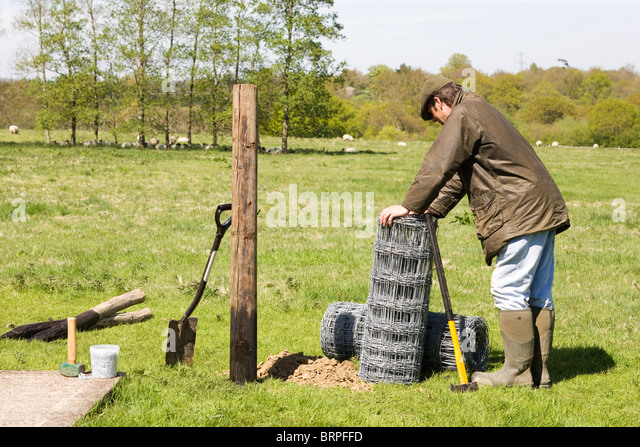 Stock Fencing sheep in field, England - Stock Image