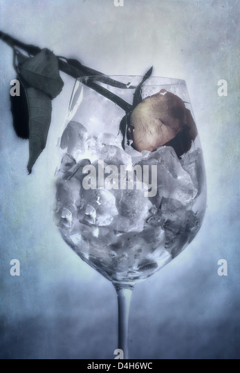 a withered rose in a glass full of ice cubes - Stock Image