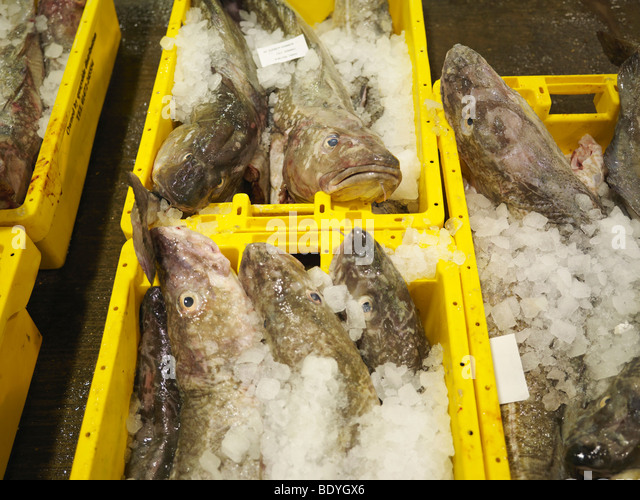Fish And Ice In Yellow Containers - Stock Image