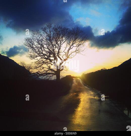 Sunset on road next to tree - Stock Image