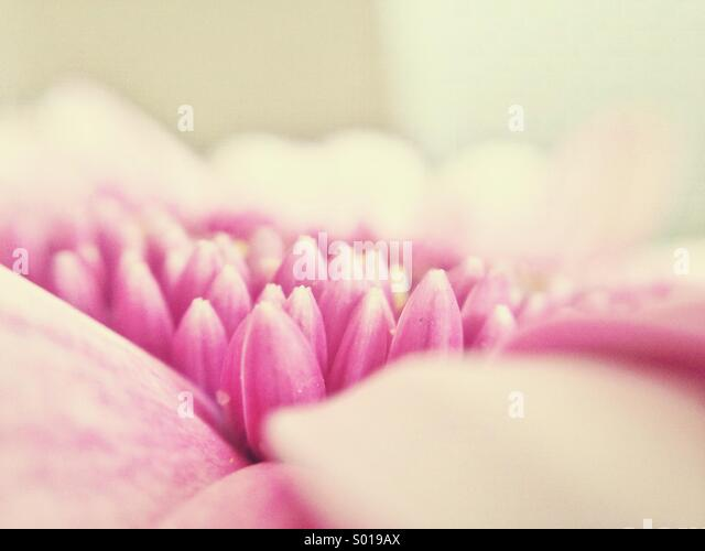 Soft bed - Stock Image