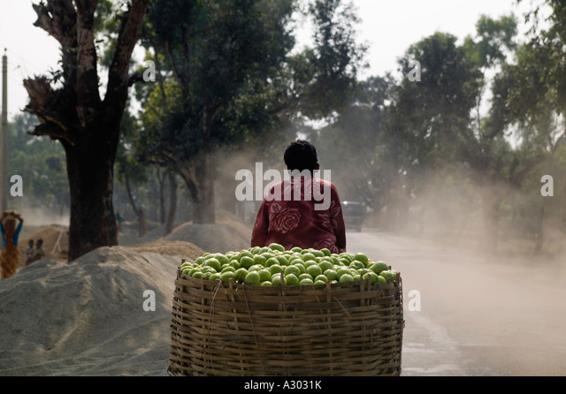 A rickshaw puller transports a large basket of green apples in northern Bangladesh - Stock Image