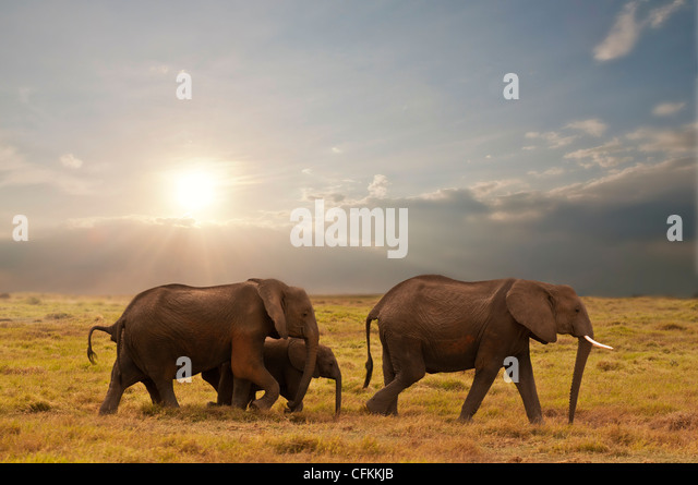 elephant family in amboseli national park, kenya - Stock Image