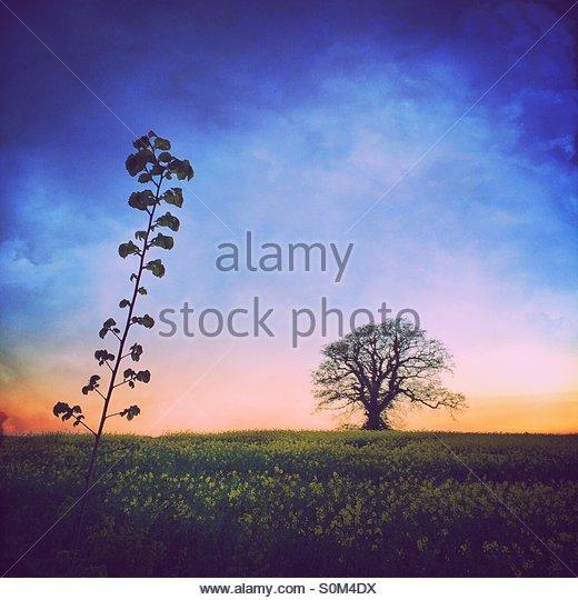 Rural Sunset Twilight - Stock Image