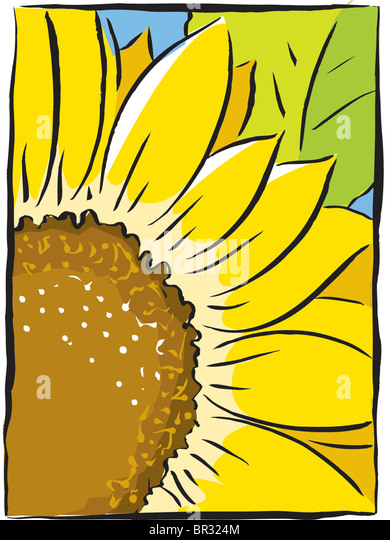 sunflower close-up - Stock-Bilder