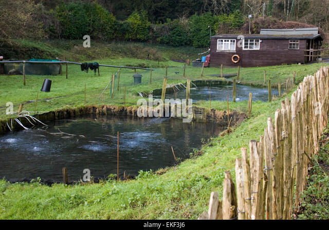 Trout ponds stock photos trout ponds stock images alamy for Stocked fishing ponds near me