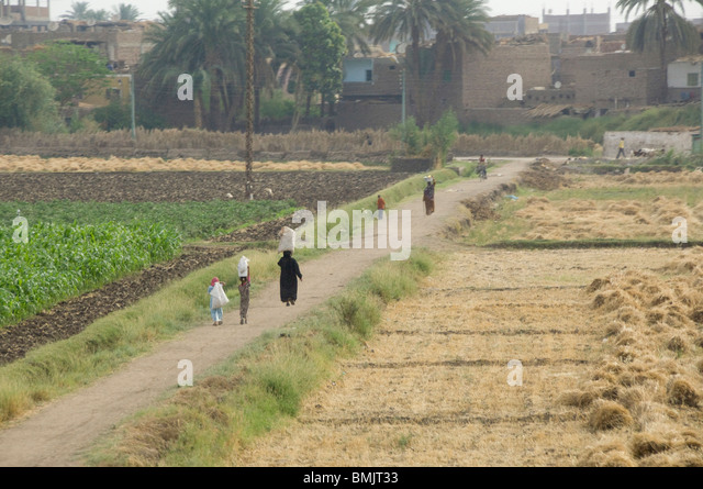 Egypt, Luxor. Everyday life in the agricultural fields of Luxor. - Stock-Bilder
