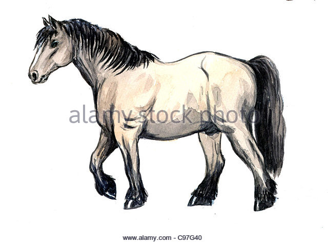Series Horse breeds cold blood - Stock Image