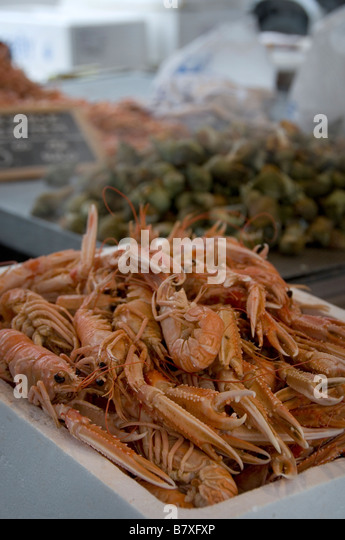 Langustine stock photos langustine stock images alamy for Flanders fish market