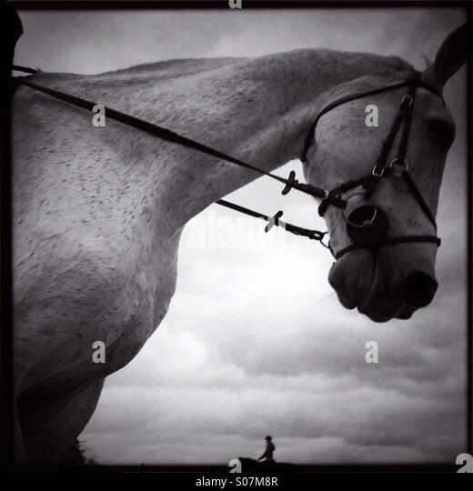 Horse riding - Stock Image