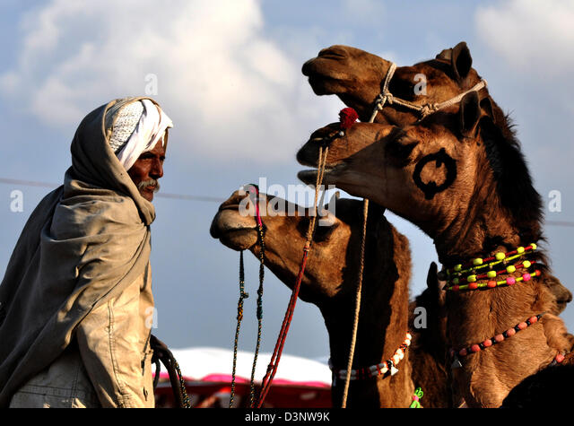 A seller looks for a purchaser during cattle fair in western Indian town of Nagaur, in Rajasthan state. - Stock Image