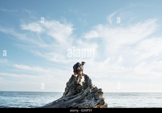 A backpacker climbs a dead tree stump while hiking Northern California's Lost Coast - Stock Image