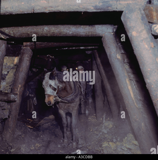 Pit Pony Stock Photos Amp Pit Pony Stock Images Alamy