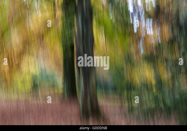 Autumn forest Impression - Stock Image