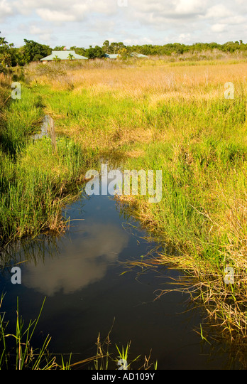 Anhinga Trail Everglades National Park Florida slough open water Royal Palm Hammock - Stock Image