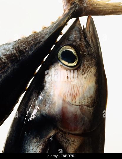 tuna - Stock Image