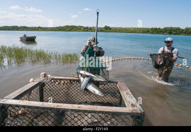 Naknek stock photos naknek stock images alamy for River fishing games