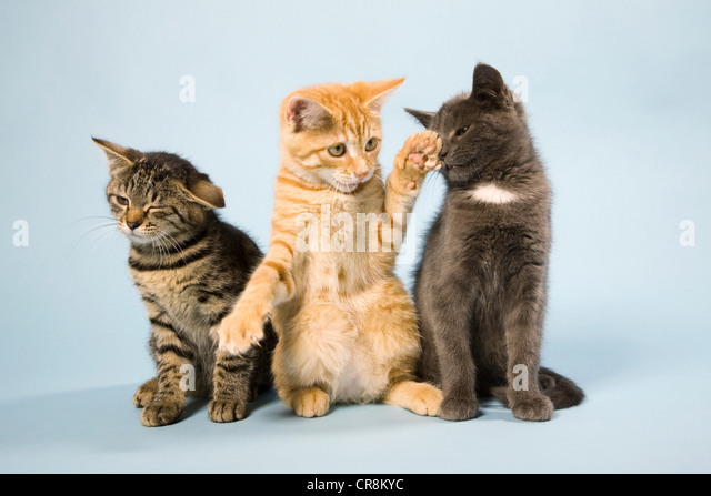 Three cats - Stock-Bilder