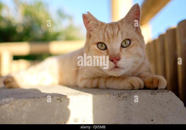 Portrait Of Cat Sitting On Seat In Gazebo - Stock Image