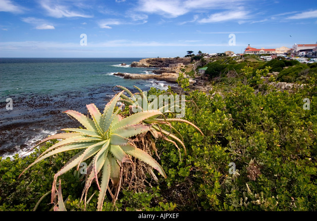 south africa western cape Hermanus coastline  - Stock Image