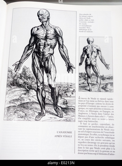 Book with detailed illustrations on human anatomy, De humani corporis fabrica by Belgian anatomist Andreas Vesalius - Stock-Bilder