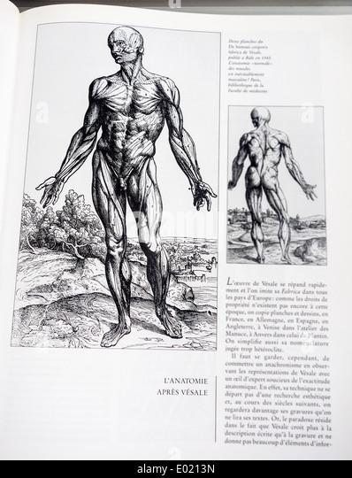 Book with detailed illustrations on human anatomy, De humani corporis fabrica by Belgian anatomist Andreas Vesalius - Stock Image