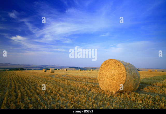 A bale of straw in a field of stubble after harvest with blue sky and summer clouds - Stock-Bilder