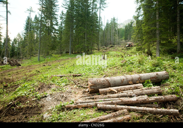 Forest and logs - Stock Image