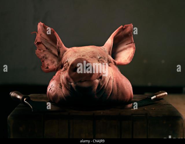 Pig's head - Stock Image