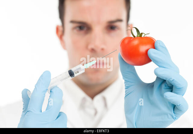 Scientist Injecting A Tomato - Stock Image