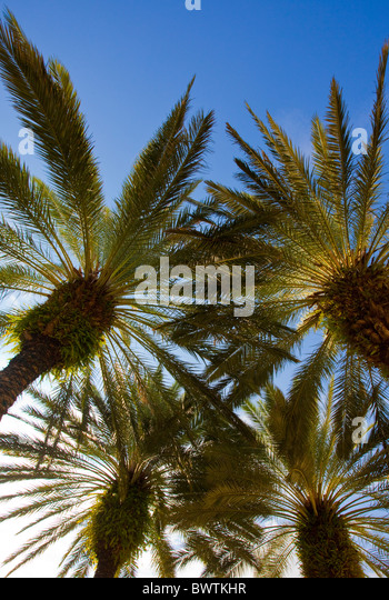 Low angle view of palm trees on sunny day - Stock Image