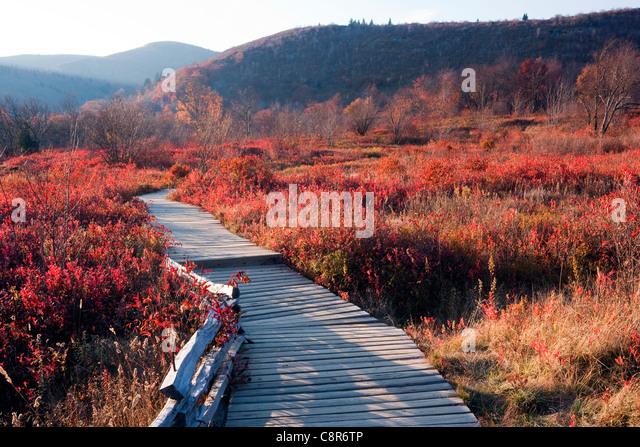 Boardwalk through Graveyard Fields - Blue Ridge Parkway - near Asheville, North Carolina USA - Stock Image