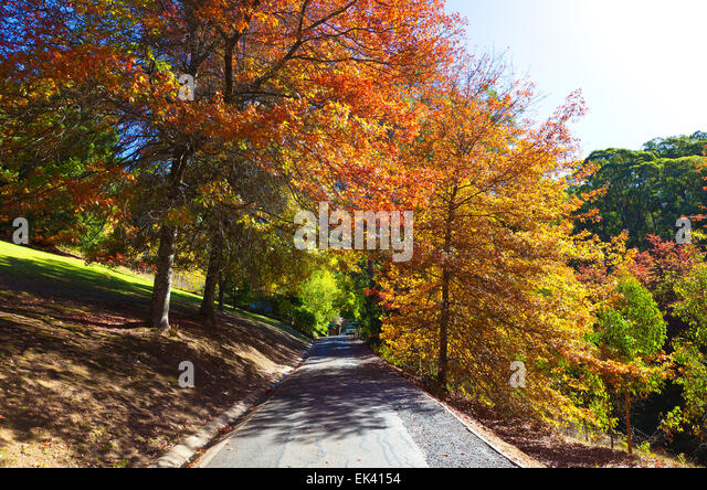Autumn adelaide hills mt lofty stock photos autumn for Landscaping adelaide north