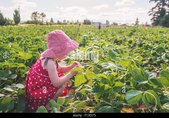 Girl picking strawberries - Stock Image