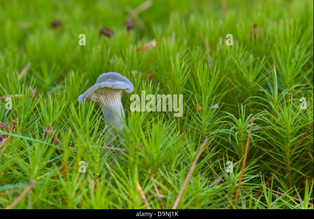 a-blue-gray-mushroom-surrounded-by-a-for