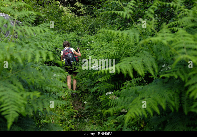 Hiker Lookout Mountain Trail Mt. Baker Snoqualmie National Forest Marblemount North Cascades National Park Washington - Stock Image