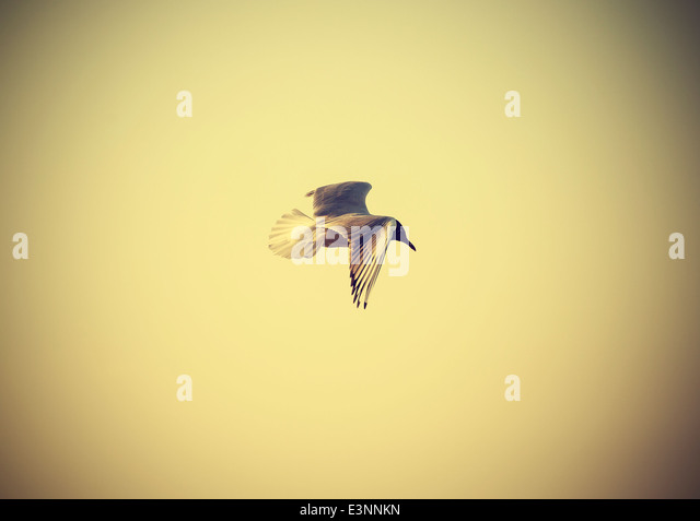 Filtered Vintage Retro Styled bird on the sea. - Stock Image